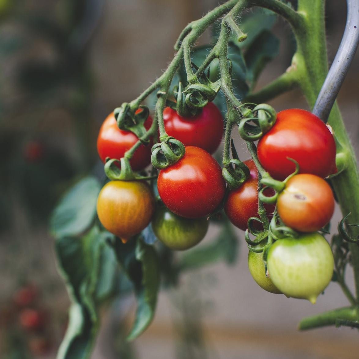 Quelques conseils pour respecter le budget alimentaire sans bons de réduction